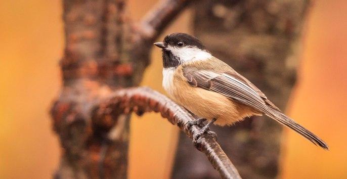 Birds (10)