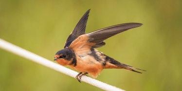 Birds (12)