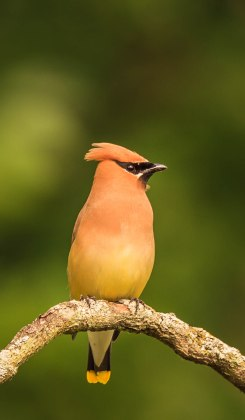 Birds (14)