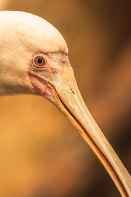 Birds (18)