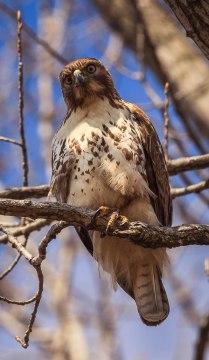 Birds (23)