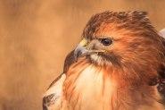Birds (24)