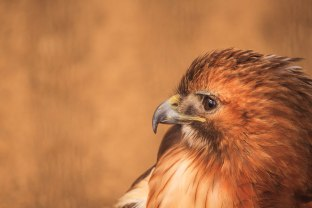 Birds (25)