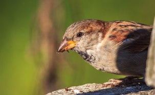 Birds (3)