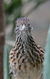 Birds (30)