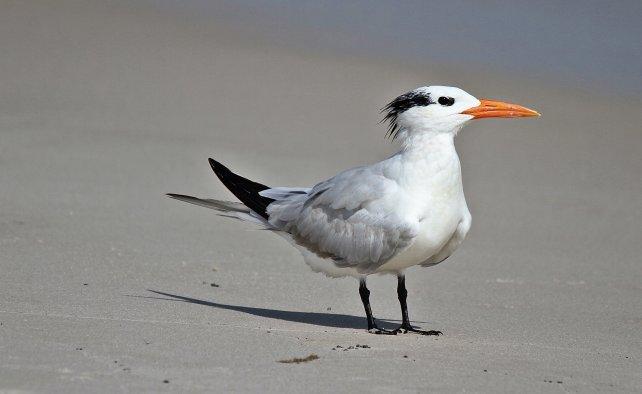 Birds (31)