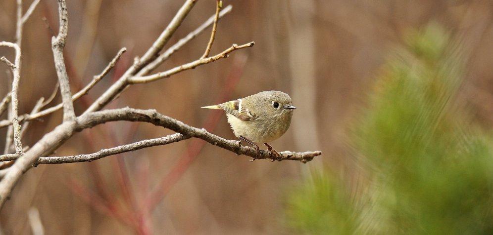Birds (32)