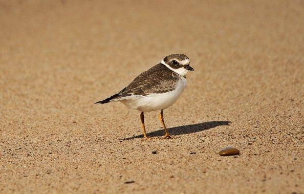 Birds (33)