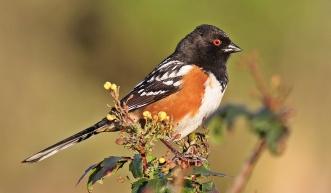 Birds (35)
