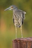 Birds (39)