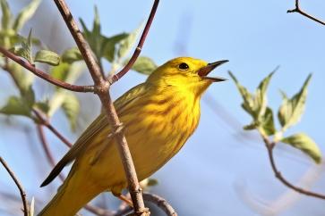 Birds (40)