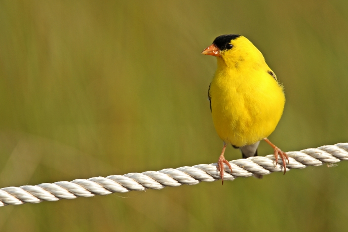 Birds (43)