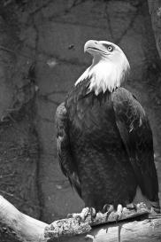 Birds (44)