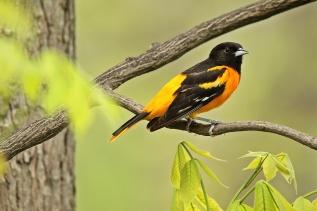 Birds (45)