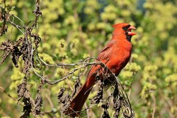 Birds (48)