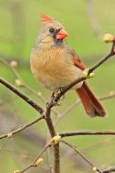 Birds (49)