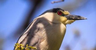 Birds (5)