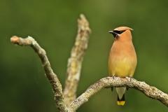 Birds (50)