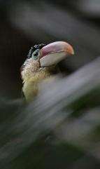 Birds (51)