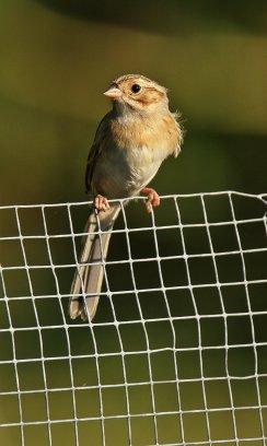 Birds (53)