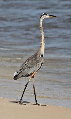 Birds (54)