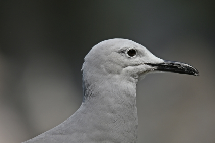 Birds (56)