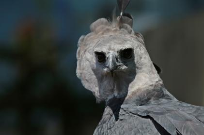Birds (57)