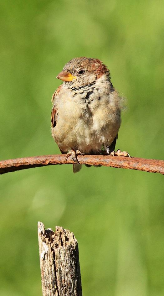 Birds (58)