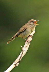 Birds (59)