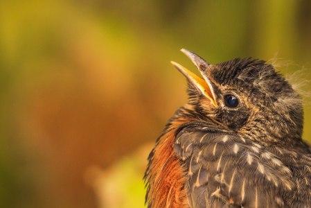 Birds (7)