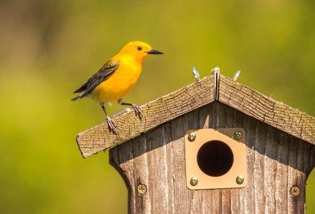 Birds (8)