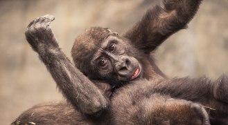 Brookfield's Zoo Animals (1)