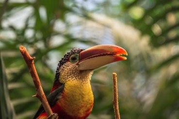 Brookfield's Zoo Animals (10)