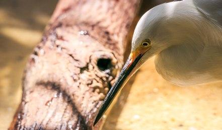 Brookfield's Zoo Animals (15)