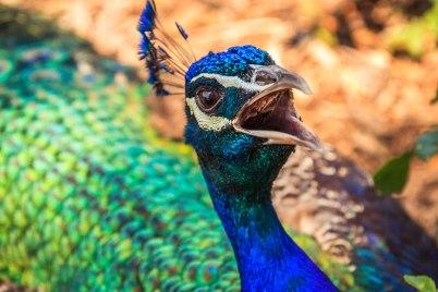 Brookfield's Zoo Animals (17)