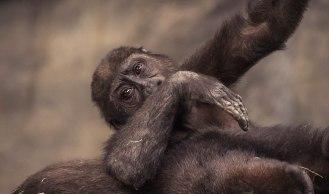 Brookfield's Zoo Animals (2)