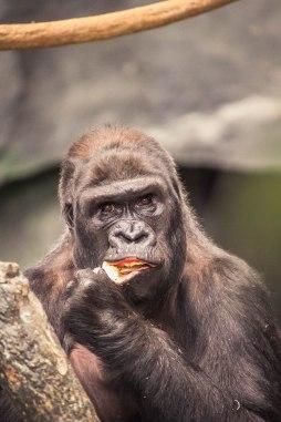 Brookfield's Zoo Animals (3)