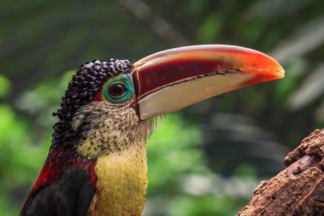Brookfield's Zoo Animals (8)
