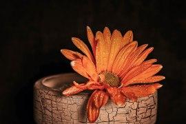 Flowers_macro (23)