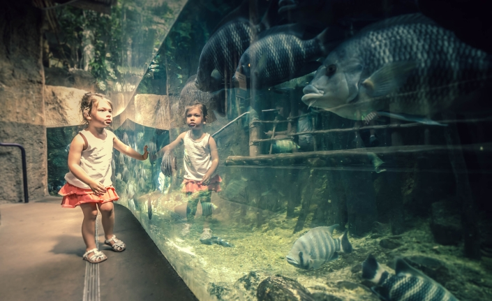 Lincoln Zoo (1)